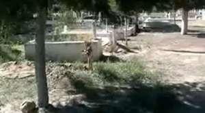MUHTEŞEM BİR YORUM ''Efelerin Efesi''