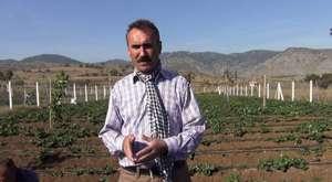 Çilek Yeştiriciliği Dikenli Köyü İçin Geçim Kaynağı Oldu