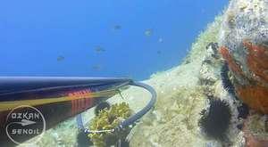 Bodrum Grida Avı - Huge Golden Grouper in 16 degrees - Zıpkınla Balık Avı