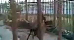 Kediye işgence yapan insan görünümlü hayvanlar !!!