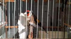 saka kuşu 007