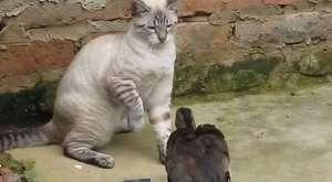 Kedilerin Salatalığa Verdiği Tepki