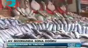 FOÇALI BALIKÇILARIN YÜZÜ 'PALAMUT' İLE GÜLDÜ (21.02.2013)