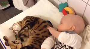 Bebekler ile oynamayı seven Kediler ve Köpekler