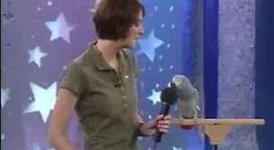 Taklit ustası güldürüp geçiren süper papağan