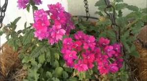 Sizden Gelenler : Bitkili Akvaryum