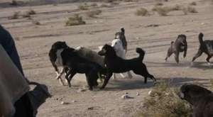 Timsah Antilopun Bel Kemiğini Kırıyor Çok Acımasızca