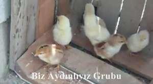 Keklik türküsüyle - Çıntar toplayalım mı ?