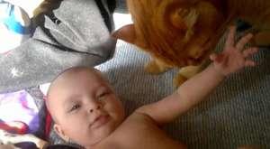 Bebek Sevmeye Gelen Kediler