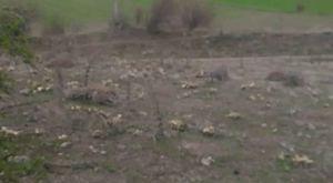 Yeşilköyde Saldırı  1kisi hayatini kaybetti