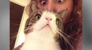Evde kedi doğumu nasıl yaptırılır ali serdar evcil hayvan bakımı