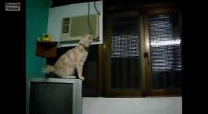 dokunmatik ekranda oyun oynayan hayvanlar