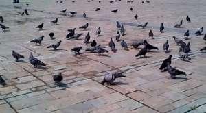 İzmir Konak Meydanı'nda Ekvator'dan tınılar