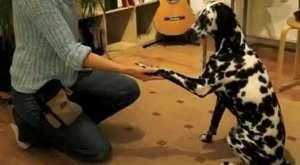 tatlı mı tatlı yavru köpekler