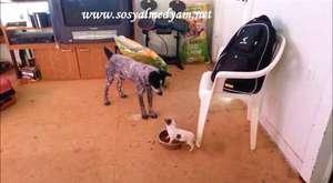 Yürek Yemiş Köpek Yavrusu