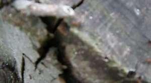 Karıncalar, ağaçta yaşayanları
