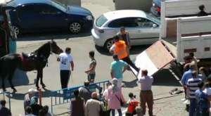 Toroslar'da okullara mandalina dağıtıldı