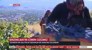 TRT Haber Gündem - Cimin Üzümü Serüveni