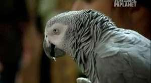 İşini bilen akıllı kuş