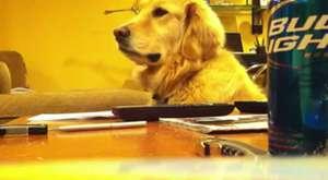 Gitara Bayılan Köpek :)