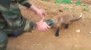 Koko, İşaret Dili ile Konuşan Goril