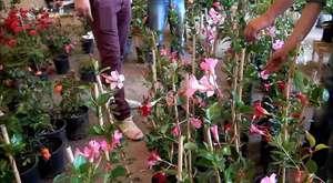 12. Karşıyaka Çiçek Festivali