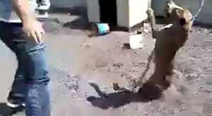 Bağlı Köpeği Kızdıran Adam Canını Zor Kurtardı