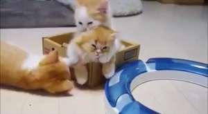 Sakar anne kedi, yavrularını çok korkuttu
