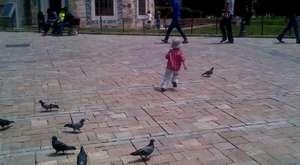 Barış Başar Yaşa, kuşlarla