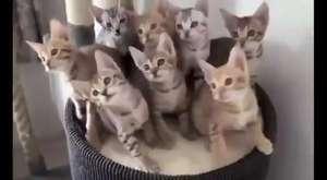 En Komik Kedi Videoları   Kesin izle  D