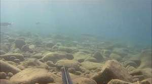 onlarca mt derinlikten gelen güzel av