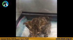 Esenyurtlu Kedi - Dost Derneği