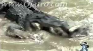 Dev Piton Yılanın Yuttuğu Hayvanı Görenler Gözlerine İnanamadı !