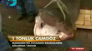Kazaklar Türk balığını sevdi (24.03.2013)