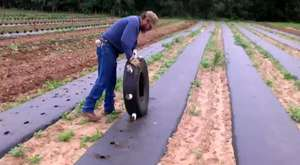 plasticulture plastic mulch hole maker - YouTube