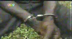 Notorious armed robber nabbed by police