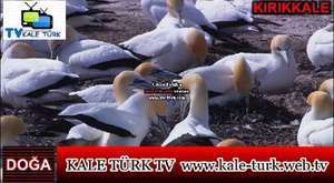 KALE TÜRK TV DOĞA