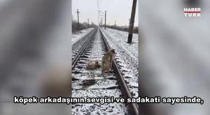 Soğukta Ayakları Asfalta Yapışarak Donan Kedi İzleyin Donmaktan Nasıl Kurtarıldı