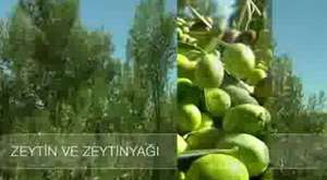 Ayvalık'ta Gastronomi www.ogmenler.net
