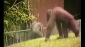 En komik Hayvanlar