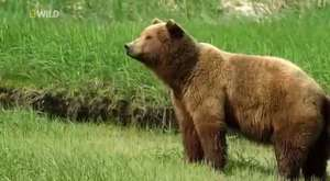 Wild Alaska english Documentary National Geographic Wild
