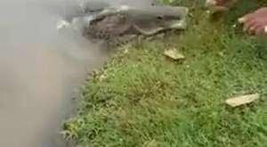 Этот мужик пришел к озеру и... рыбы тут же выплыли к нему