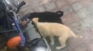 Trafik Kazalı Kedimiz Taburcu Oldu - Dost Derneği