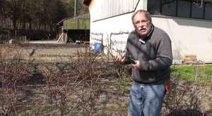 Heidelbeeren im Garten die einfache Methode
