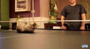 Kediler Hakkında Sizi Şaşkına Çevirecek 20 Bilgi