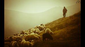 Çoban Ali - Derdi Neymiş