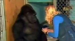Kedisi Ölen Goril'in İşaret Diliyle Üzüntüsünü İfade Etmesi