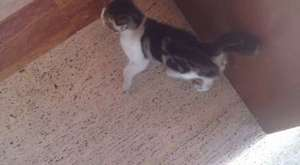 Tatlı kedi 3