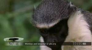 Akıllı maymun kendine bir içecek satın alıyor