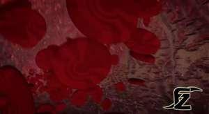 Ebru Şallı Göbek ve Basen Eritme